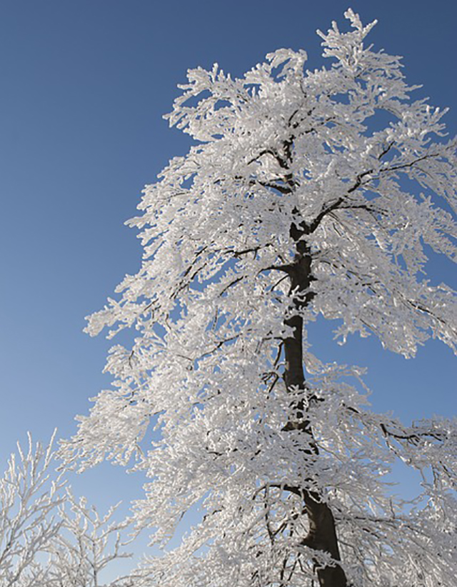 Winter Photos - Caris Roane Paranormal Romance Author