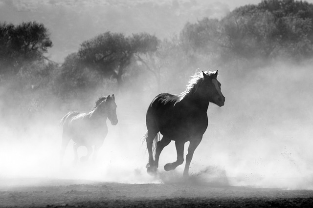 Writing Inspiration - Horses