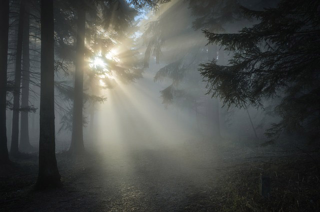 Writing Inspiration - Forests - Caris Roane Paranormal Romance Author