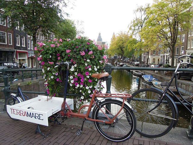 Bicycles and Flowers - Caris Roane Paranormal Romance Books