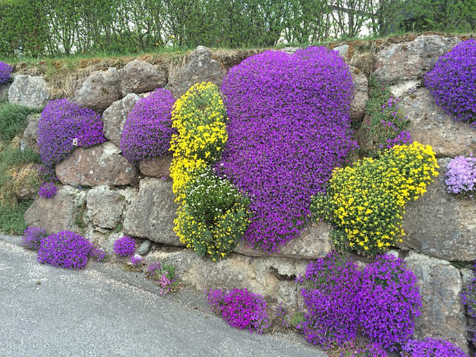 Spring Beauty and Stone