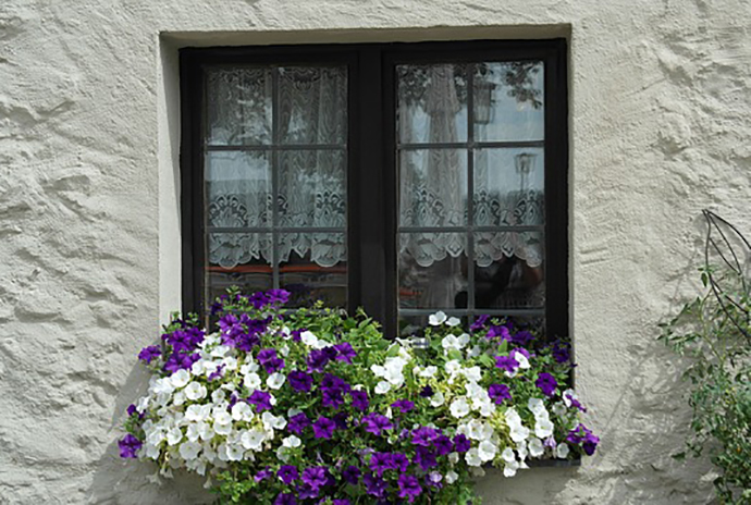 Windows and Flowers